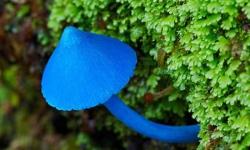 Fungi present in Chile