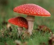 Toxic Fungi